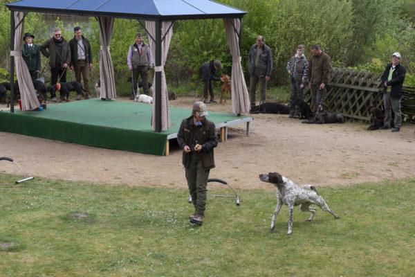 Jagdhundeausbildung präsentiert von Alexandra Weibrecht