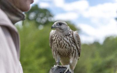 Der Falkenhof braucht dringend Hilfe