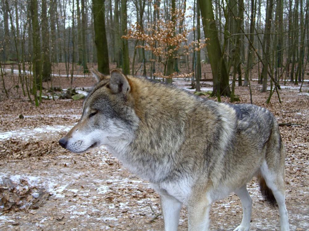 Wolf_Franck-e1483627822677