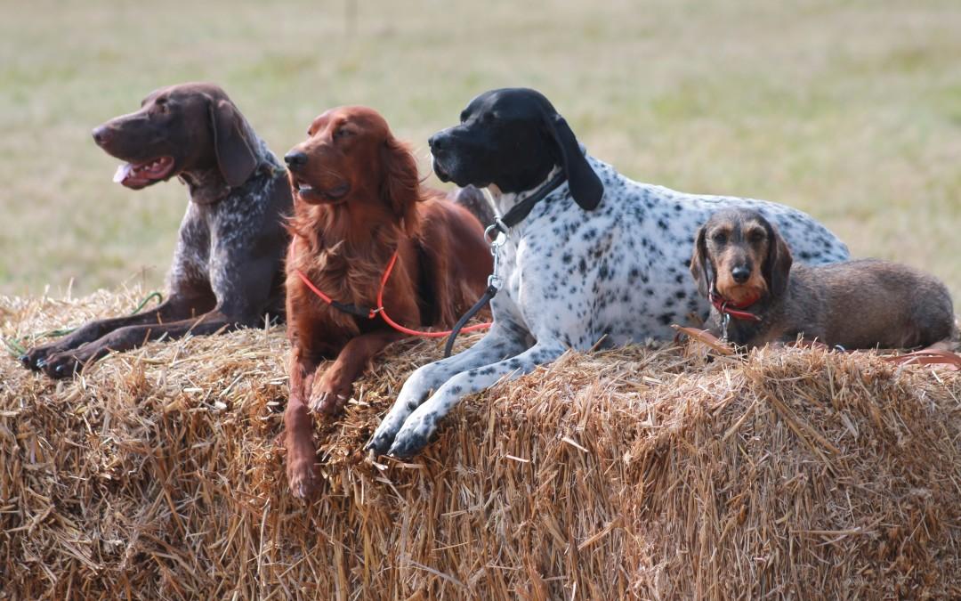 Bitte beachten: Sonderkonditionen für Jagdhunde