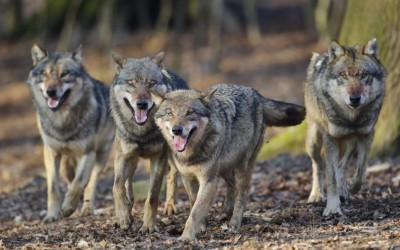 Verbändegespräch zum Wolf