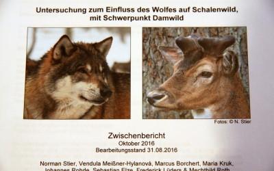Einfluss des Wolfes auf Schalenwild mit Schwerpunkt Damwild