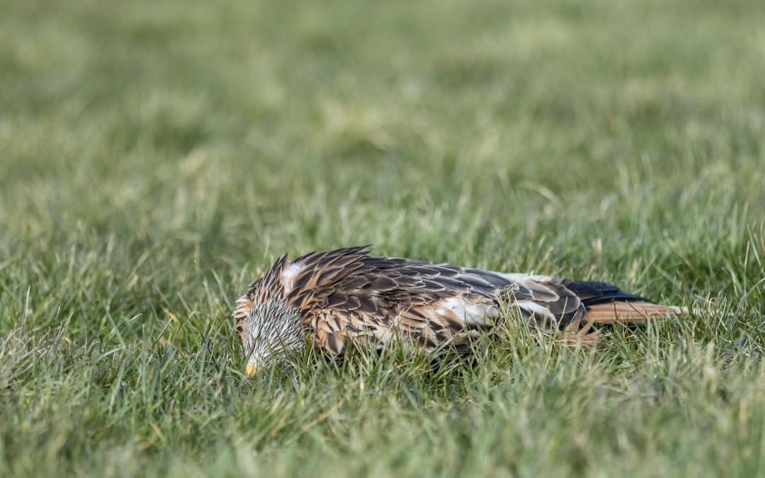 Jäger und Falkner für schärfere Strafverfolgung bei Nestzerstörungen
