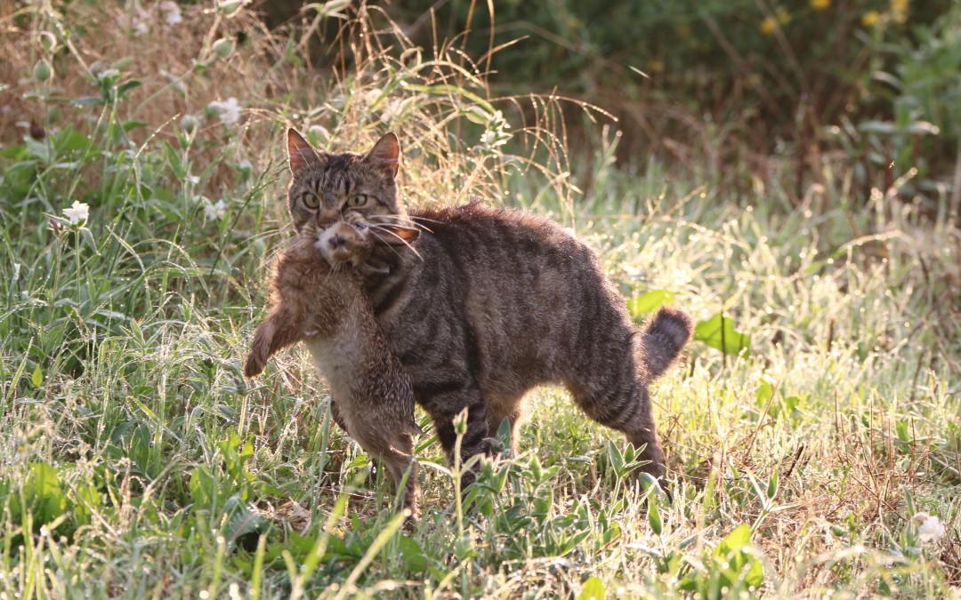 Von Spatzen und Katzen