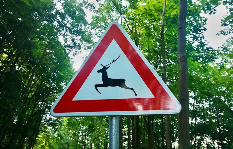 Wildunfälle in Deutschland