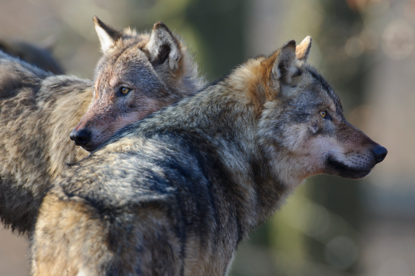 Wolf_Rolfes-DJV-1_2019-e1548141879783