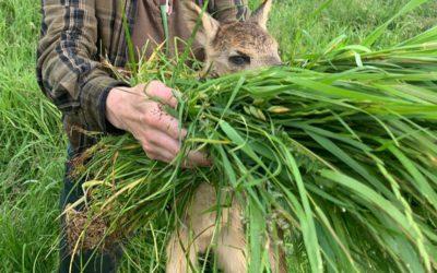 Kitzrettung – Praxisratgeber Mähtod zum Schutz von Jungwild und Wiesenvögeln