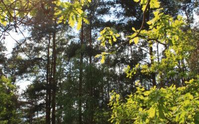 Internationaler Tag der Wälder am 21. März 2020