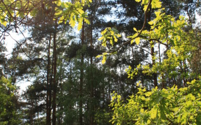 Waldumbau: Schutzmaßnahmen gewinnen an Bedeutung