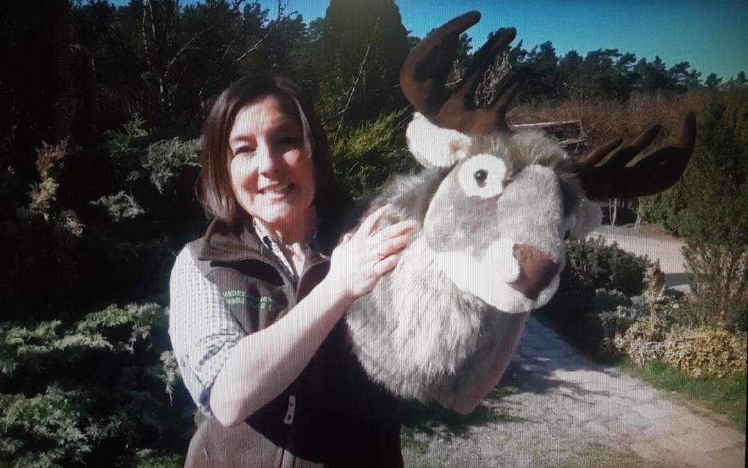 """Neue Youtube-Serie """"Mit dem Hirsch auf der Pirsch"""" zeigt den Kindern die Natur auf dem Bildschirm"""