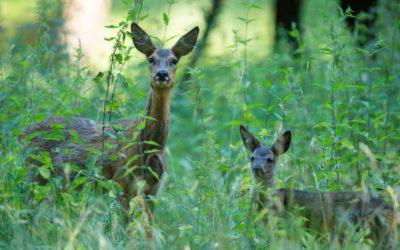 Waldstrategie 2050: DJV kritisiert Inhalte und Verfahren scharf
