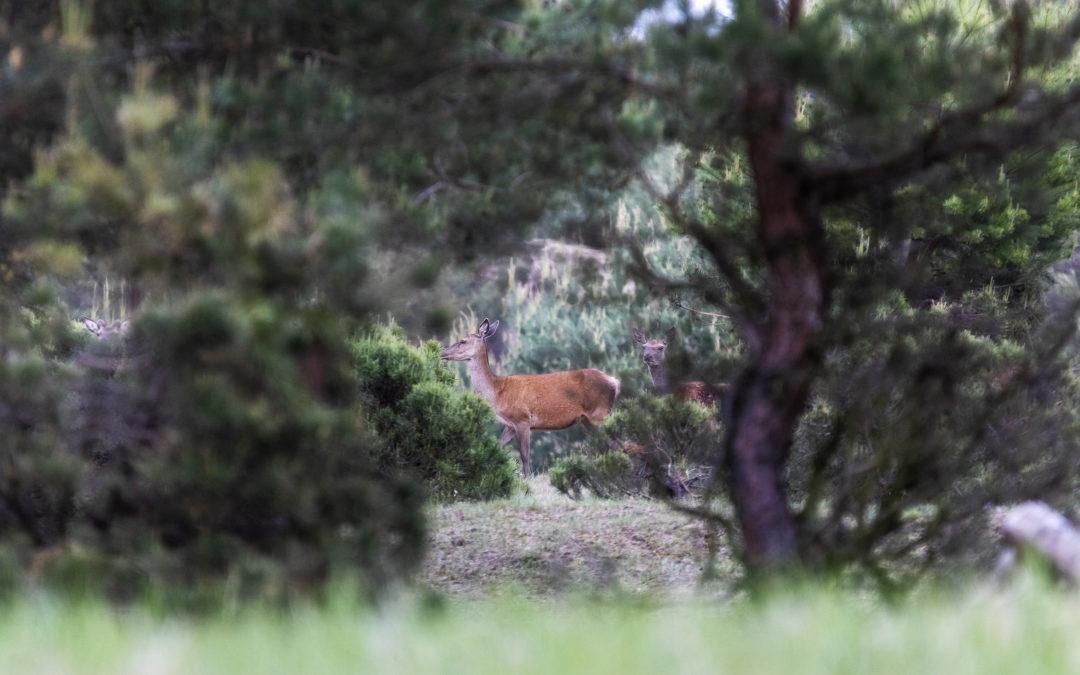 Forst-Jagd-Konflikt lösen