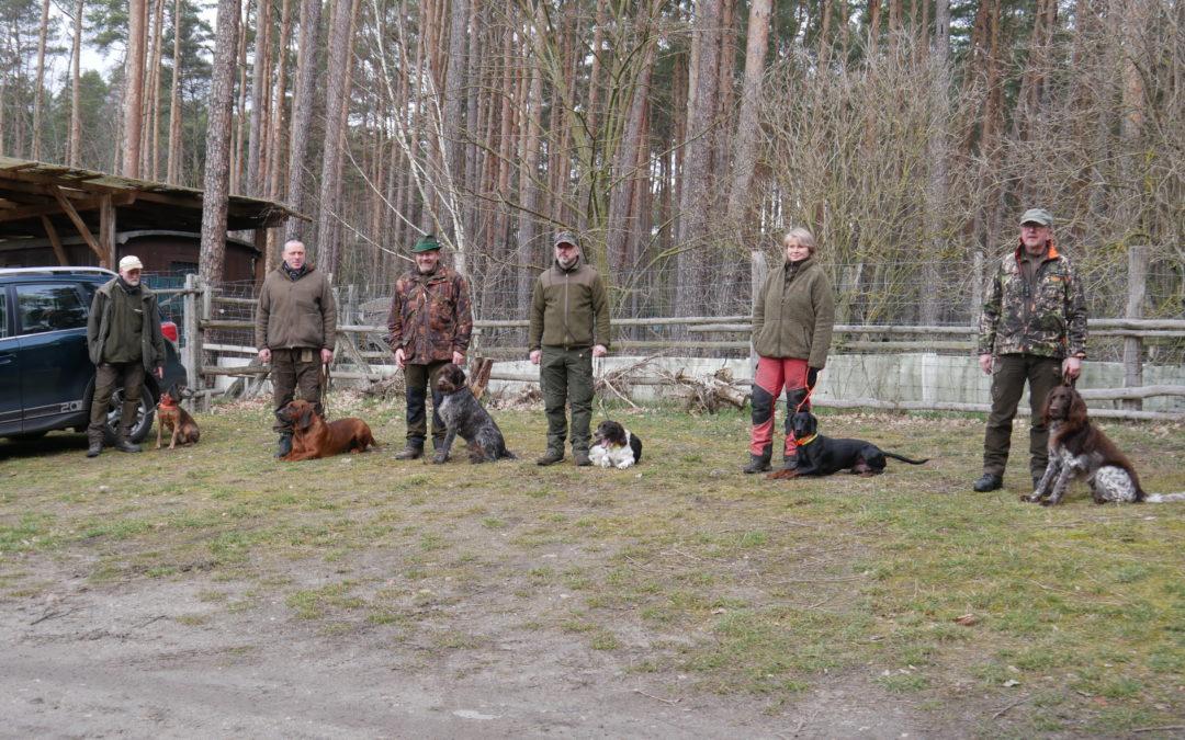 Landesjagdverband beginnt ASP-Kadaversuchhundeausbildung