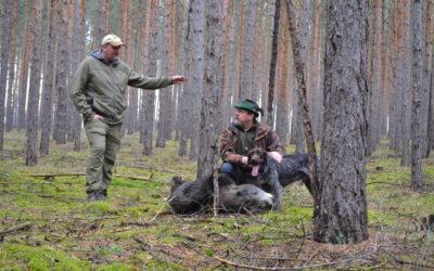 Erste ASP-Kadaversuchhunde-Gespanne geprüft