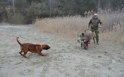 ASP-Kadaversuchhunde-Ausbildung praxisorientiert und beispielhaft