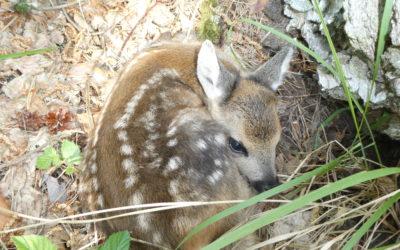 Der LJVB ist nun Mitglied der Norddeutschen Wildtierrettung e. V.