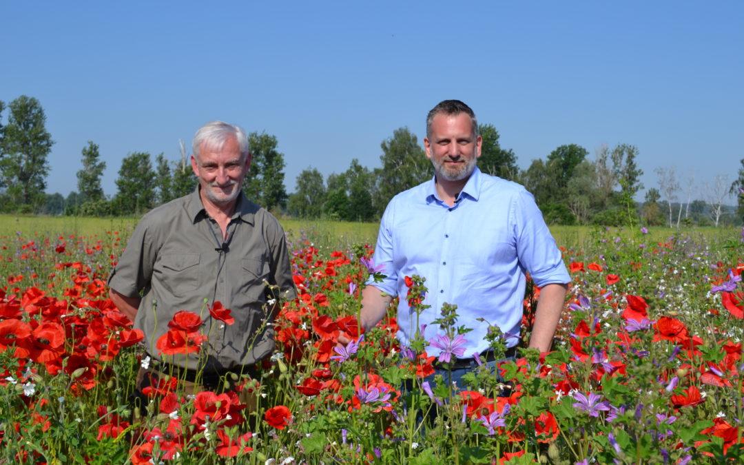 Blühstreifen für die Artenvielfalt